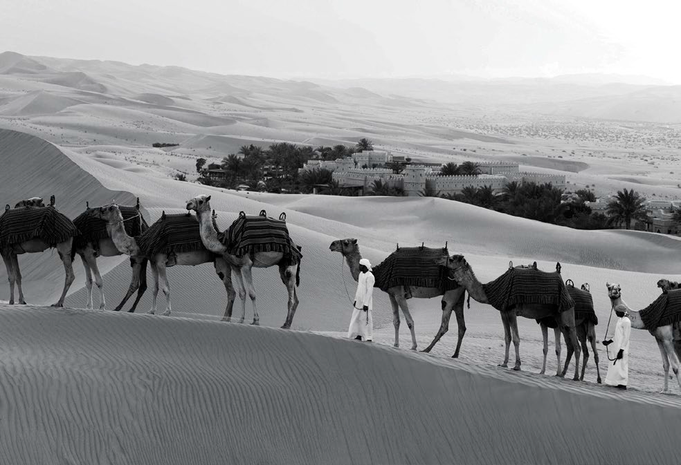 04 Camels are the traditional form of transport in this part of the world, but the writer took the wheel of a Ferrari.