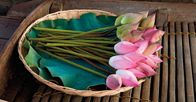 Fresh sources lotus plants from different parts of the world – not just Cambodia – to get the best.