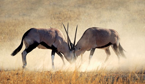 The native wildlife of Kruger National Park