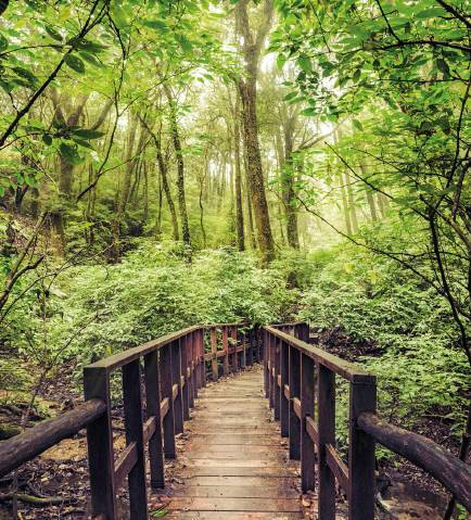 How Nature Can Make You Less Stressed Out